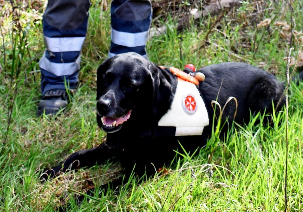 Labrador-Hündin Lissi von der Johanniter-Rettungshundestaffel aus Braunschweig besteht mit Herrin Heidi Heuer die Prüfung und ist ab sofort für 24 Monate für die Einsätze in Flächensuche zugelassen. Quelle: Valea Schweiger/ Johanniter