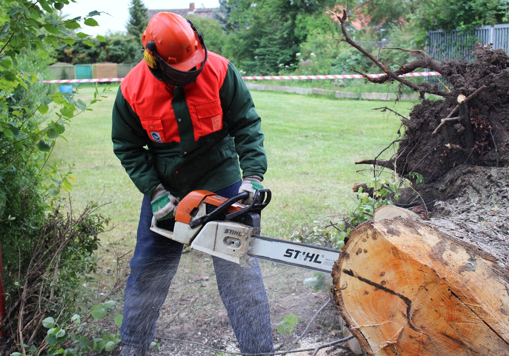 Einigen Bäumen in Lehre ging es an den Kragen. Symbolbild: Max Förster