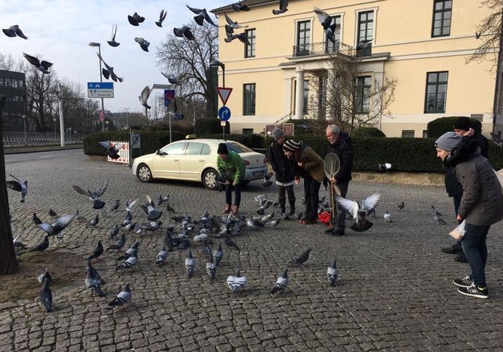 Die Mitglieder der Initiative Stadttiere kümmern sich um verletzte und gehandicapte Tauben. Fotos, Video und Podcast: Alexander Dontscheff