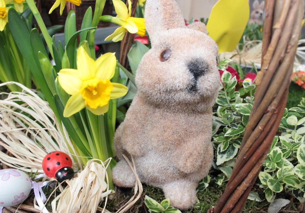 """Am 4. April wird in der Stadtbibliothek das Bilderbuch """"Überraschung für den Osterhasen"""" gelesen. Foto: Anke Donner"""