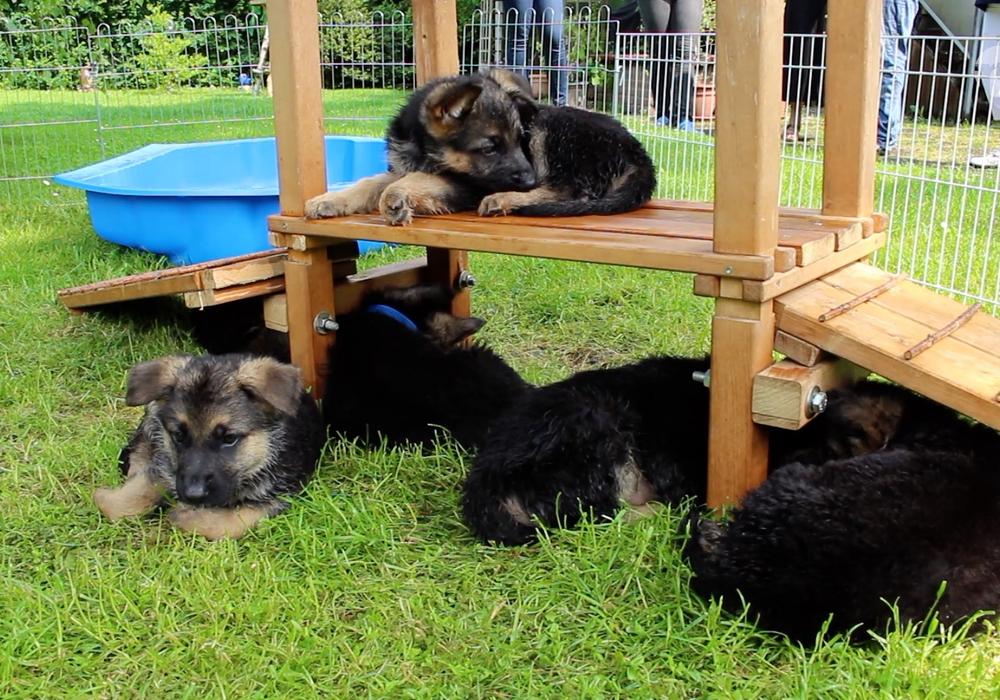 In Fümmelse sollen keine Hunde über das Gelände der ehemaligem Gärtnerei tollen. Symbolfoto: Nadine Munski-Scholz