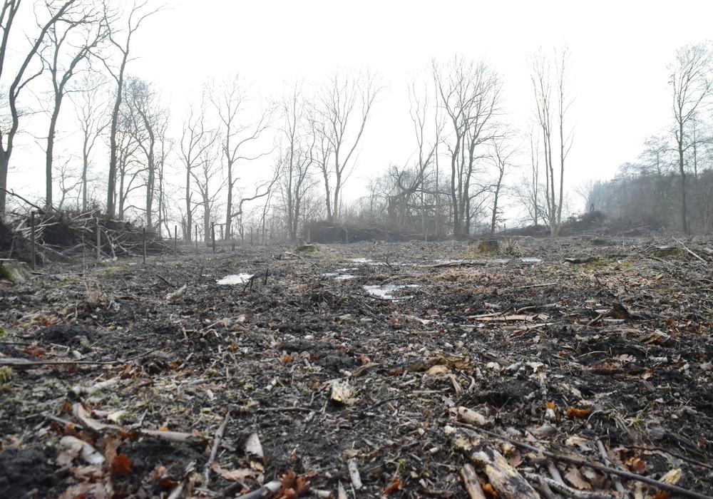 Kahlschalg im Meerdorfer Holz. Foto: Karl-Friedrich Weber, Waldpolitischer Sprecher des BUND Niedersachsen