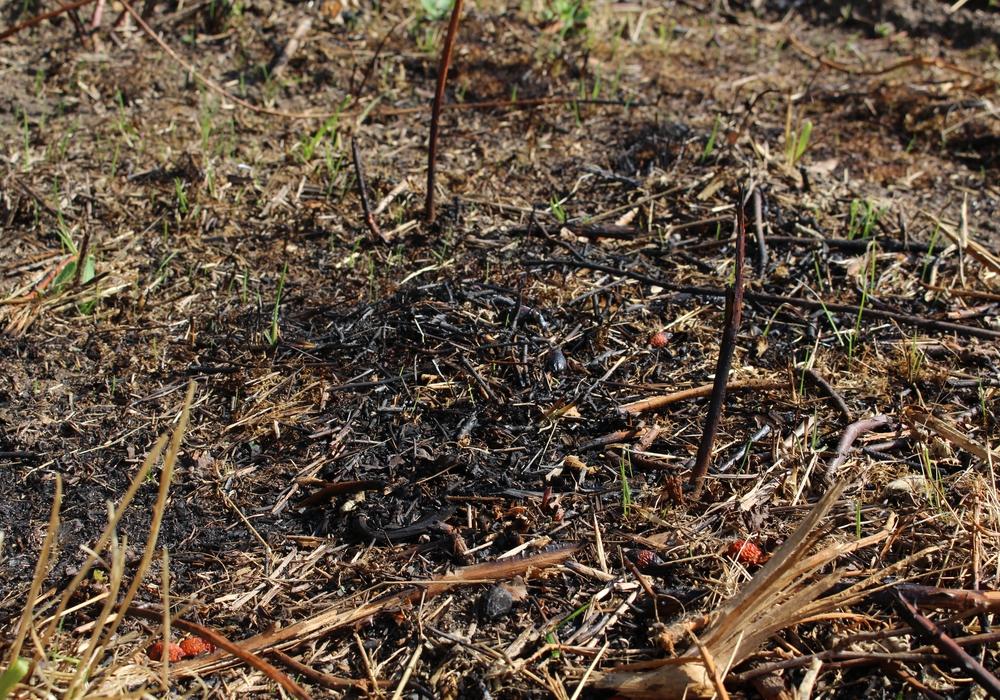 Der schnelle Einsatz der Anwohner hielt die Brandfläche klein. Foto: Kai Baltzer