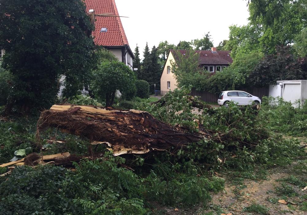 Schäden, wie beim Unwetter vor einigen Wochen blieben  diesmal bislang aus. Symbolfoto: Anke Donner