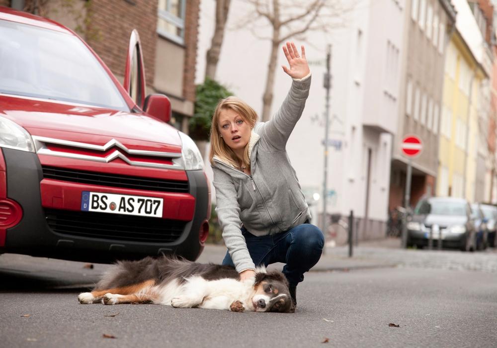 Jeder Hundebesitzer sollte die Erste Hilfe am Hund beherrschen. Foto: ASB/P.Nierhoff