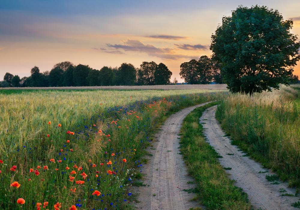 Blütenreiche Raine am Wegesrand bieten der heimischen Fauna wertvollen Lebensraum. Aus diesem Grund wirbt die Untere Naturschutzbehörde des Landkreises auch für den Erhalt dieser wichtigen Rückzugsorte auch außerhalb der Brut- und Setzzeit. Fotoquelle: istockphoto.com/ysuel