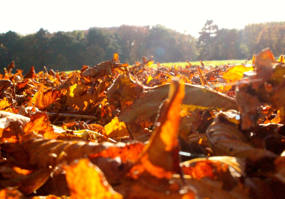 Herbstzeit ist Laubzeit. Symbolbild: Sina Rühland