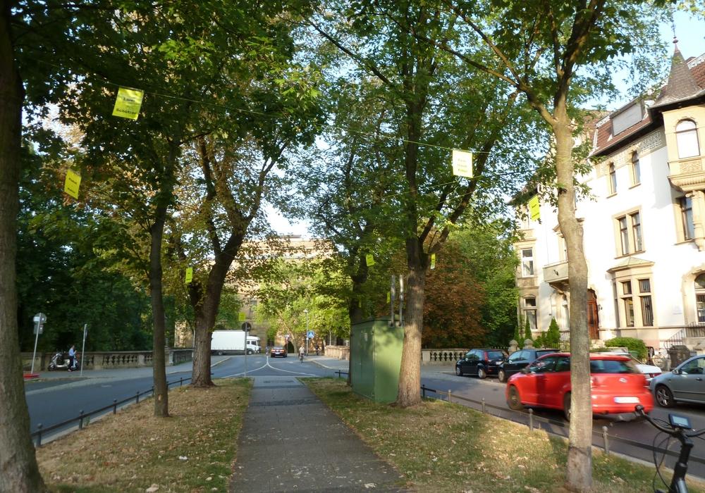 Die Bürgerinitiative Baumschutz Braunschweig macht sich für den Erhalt für die Ahornbäume auf der Jasperallee stark. Foto: Bürgerinitiative Baumschutz Braunschweig