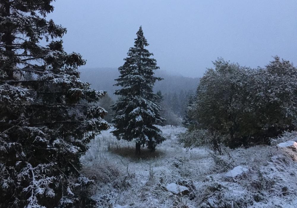 Am Wochenende in den winterlichen Harz. Foto: Marc Angerstein