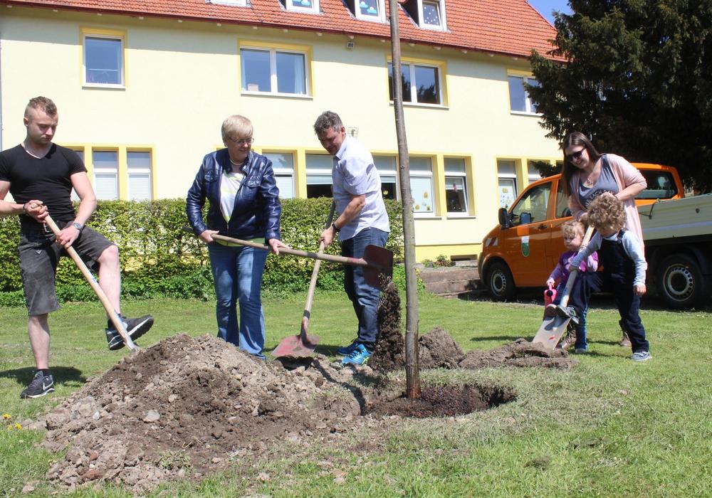 Die Wählergemeinschaft Langelsheim spendete eine Baum für die Jugendarbeit. Die Winterlinde wurde vor das Jugendzentrum gepflanzt. Fotos: Anke Donner