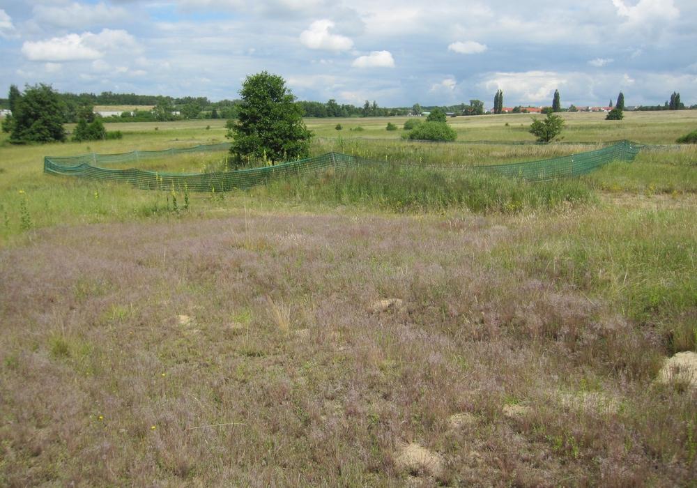 Zäune schützen brütende Vögel sowie Amphibien und deren Laich. Fotos: Landkreis Wolfenbüttel