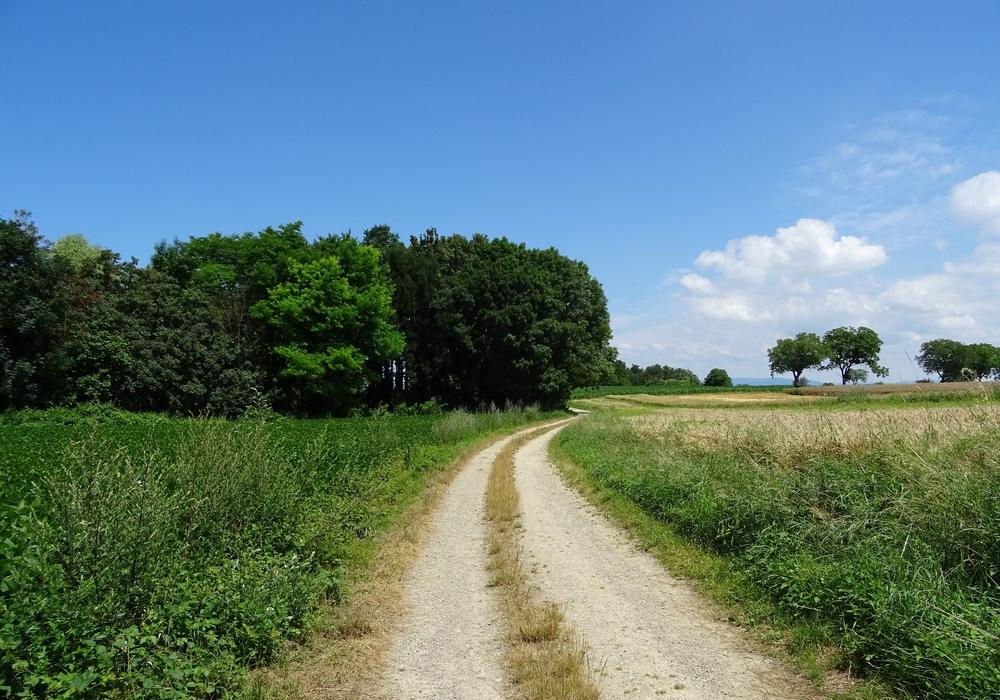 AG Wegrain des NABU Niedersachsen fordert die Bevölkerung auf, das Potential von Wegrainen zu erkennen und zu nutzen. Symbolfoto: Pixabay