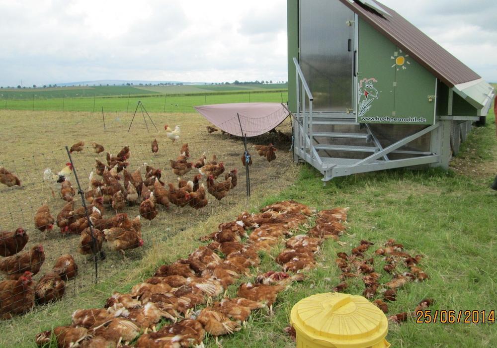 Das Geflügelsterben geht leider weiter. Foto: Polizei