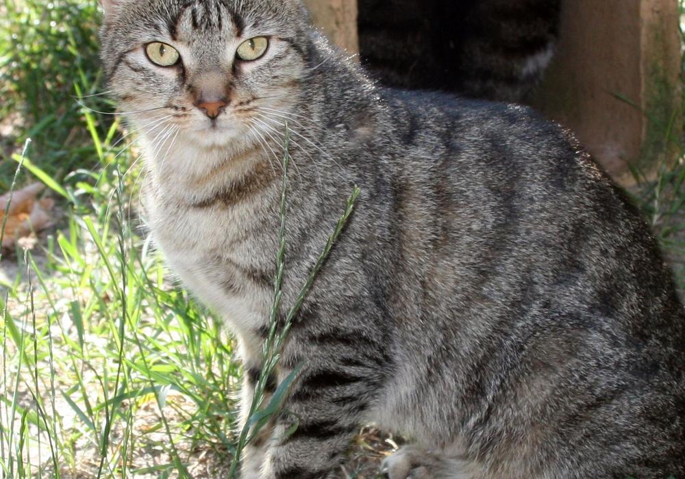 Katze Kitty sucht ein Zuhause. Foto: Tierschutzzentrum Ribbesbüttel