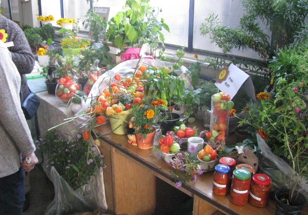 DRK Adersheim- Leinde Pflanzenbörse