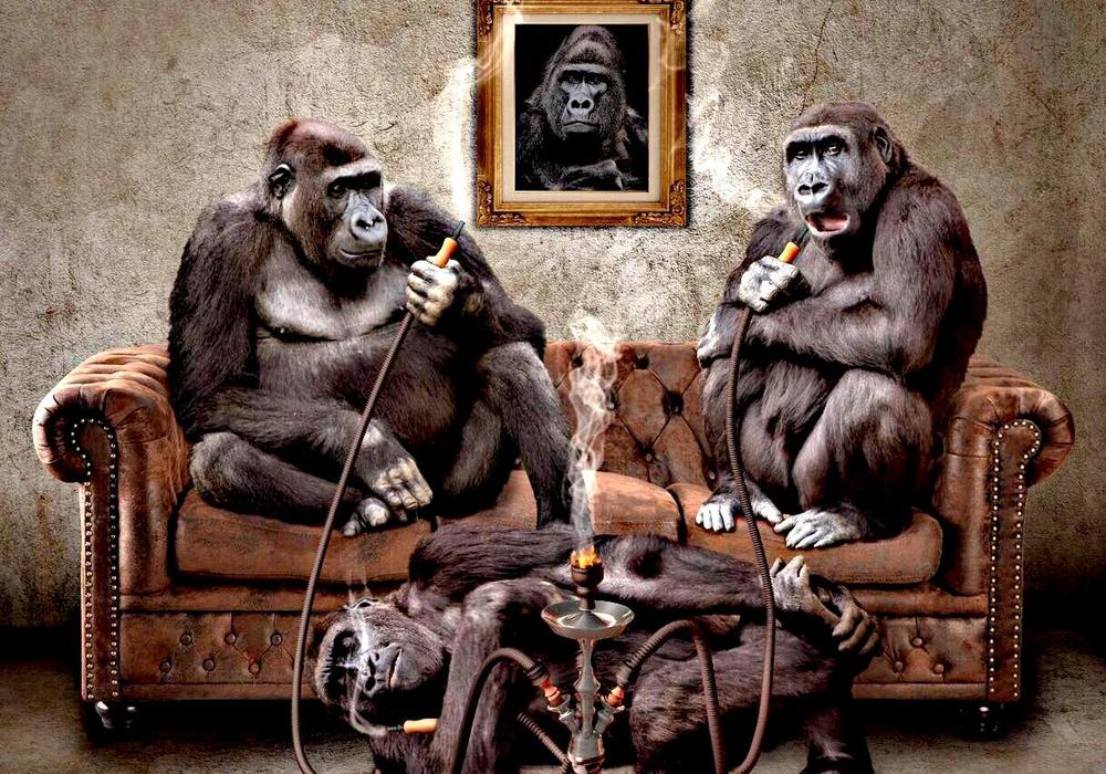 """""""Gute Vorsätze für das Jahr 2018"""" - Was für ein Affentheater. Foto: Pixabay"""
