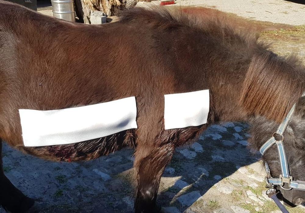 """Pony """"Clärchen"""" wurde verbunden. Noch ist sie nicht über den Berg. Foto: Melanie Beischall"""
