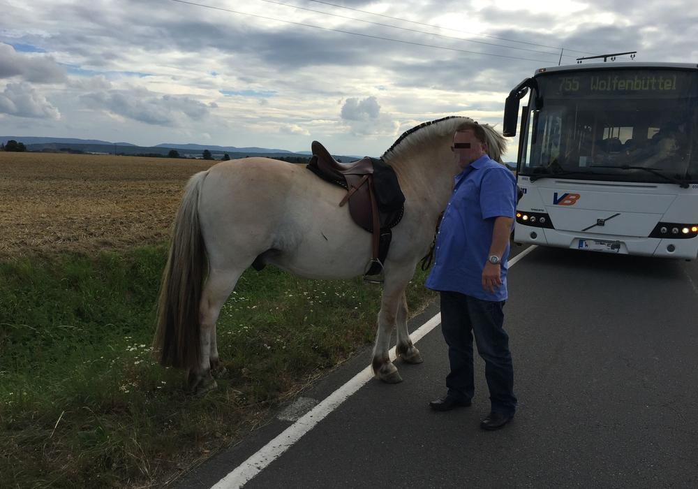 Auf der B82 bei Hornburg lief am Abend ein herrenloses Pferd umher. Ein Busfahrer konnte das Tier einfangen. Foto: Anke Donner