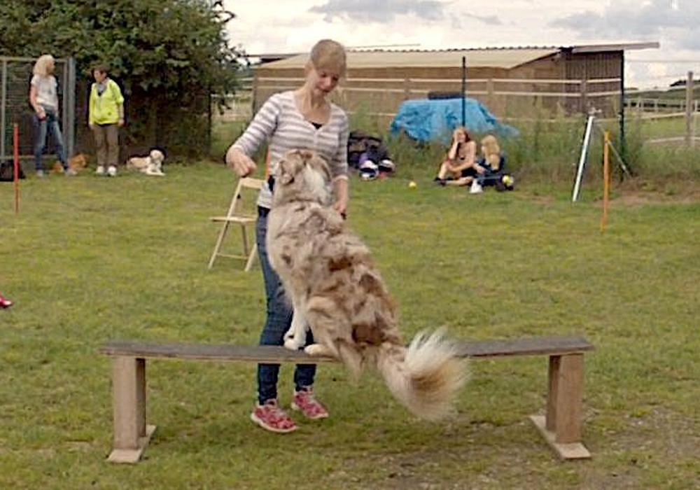 Noch sind einige Plätze für den Hundewettbewerb frei. Foto: Gifhorner Tierschutzverein Gifhorn und Umgebung