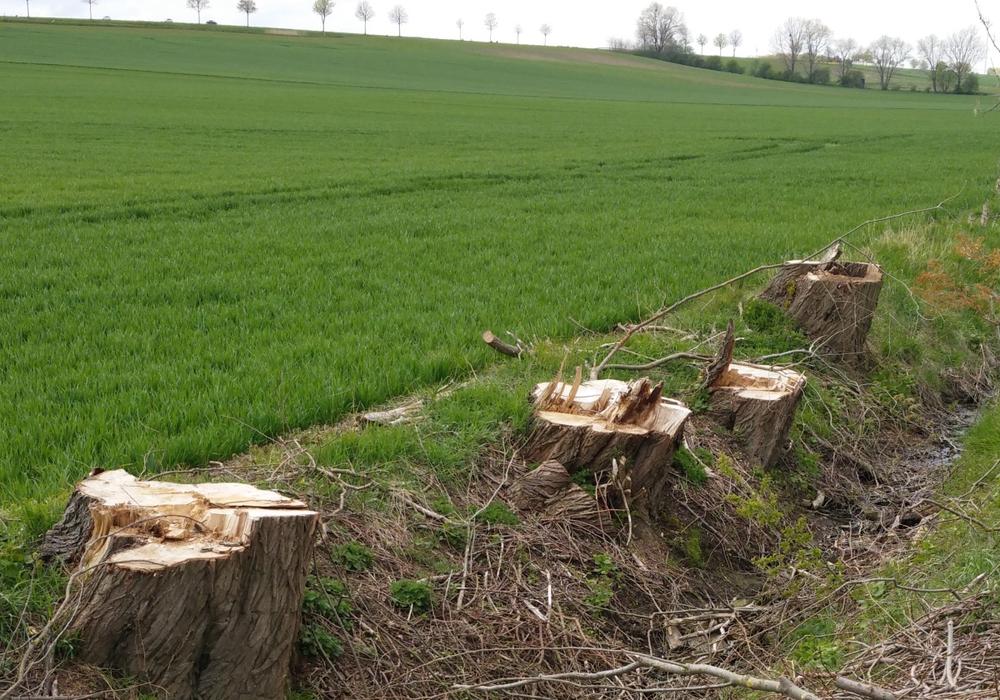Durch die Stadtverwaltung wurde laut Polizei kein Auftrag zur Baumfällung in Veltenhof vergeben. Symbolfoto: Frank Weyhers