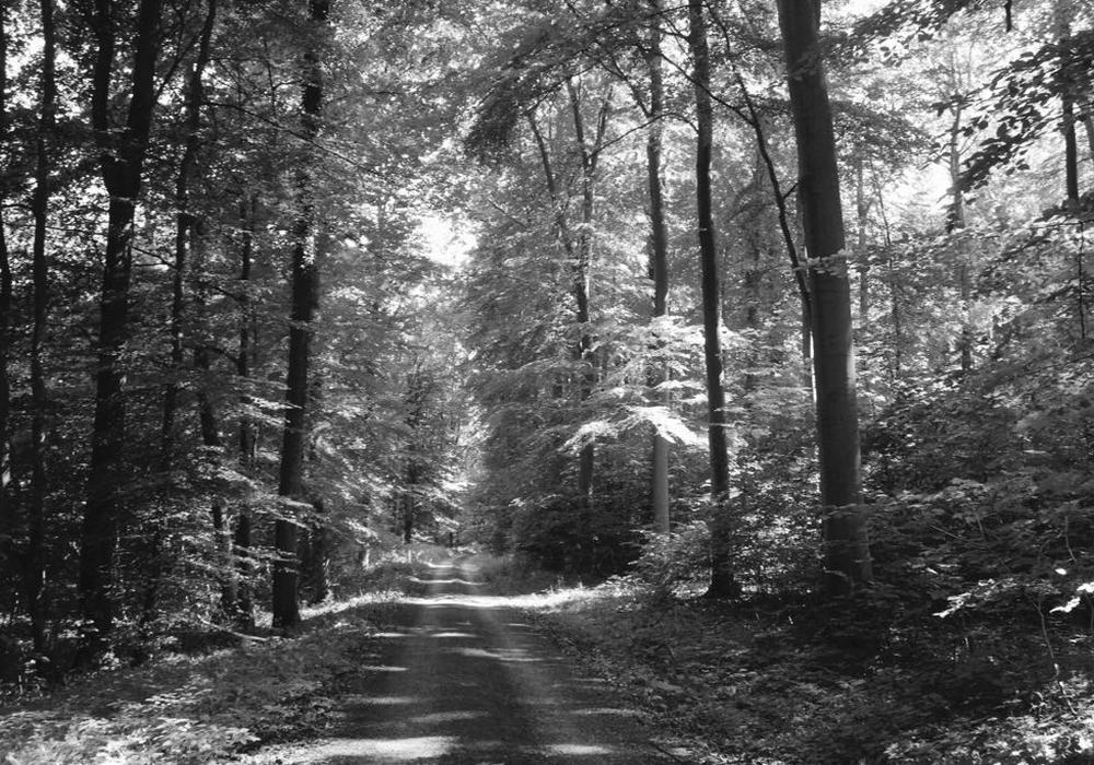 Am 13. August findet ein Waldspaziergang des Hospizverein Wolfenbüttel statt. Symbolfoto: Anke Donner
