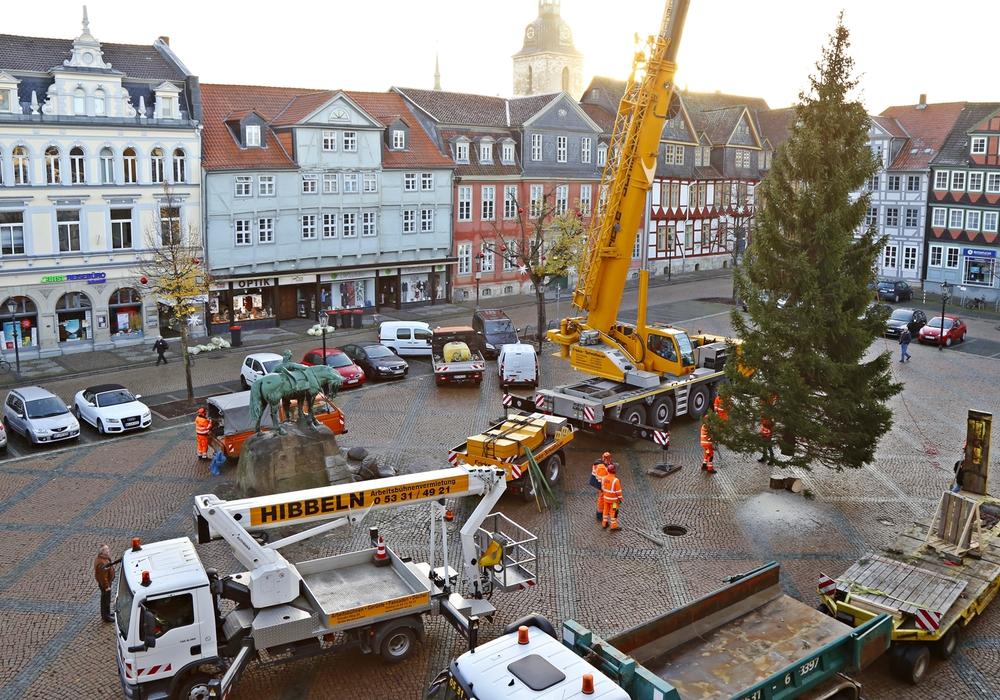 Die Friedenstanne wurde auf dem Stadtmarkt aufgestellt. Fotos: Stadt Wolfenbüttel