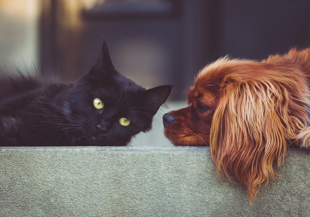 Hund, Katze und viele andere Tiere hoffen auf ein neues Zuhause. Symbolfoto: Pixabay