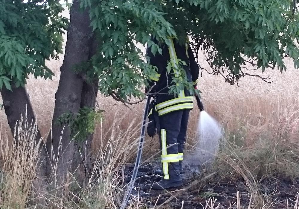 Die Brandfläche wird gründlich abgelöscht. Foto: Feuerwehr Winnigstedt