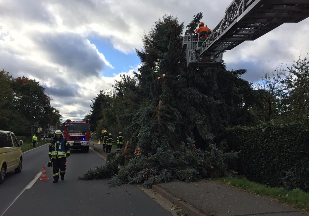 Umgestürzte Bäume beschäftigten auch die Wolfsburger Ortsfeuerwehren. Fotos: Volkmar Weichert/Feuerwehr Vorsfelde