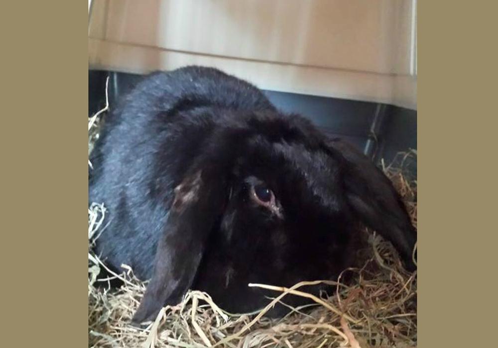 Wer vermisst dieses Kaninchen? Foto: privat