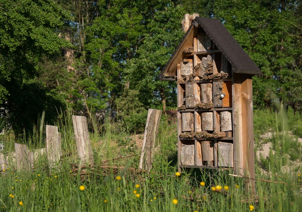 Im Naturschutzgebiet Riddagshausen gibt es sie bereits: Wildbienenhotels. Besucherinnen und Besucher des 2. Blumenmarkttages erfahren, wie sie sich ein Wildbienenhotel für ihren eigenen Garten bauen können. Foto: Braunschweig Stadtmarketing GmbH