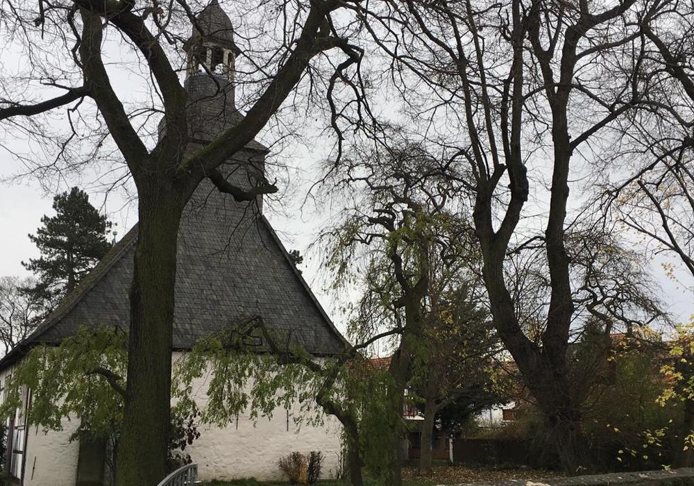 Das europaweit auftretende Eschensterben sei laut Verwaltung auch in Wolfenbüttel stark vertreten. Foto: Nick Wenkel