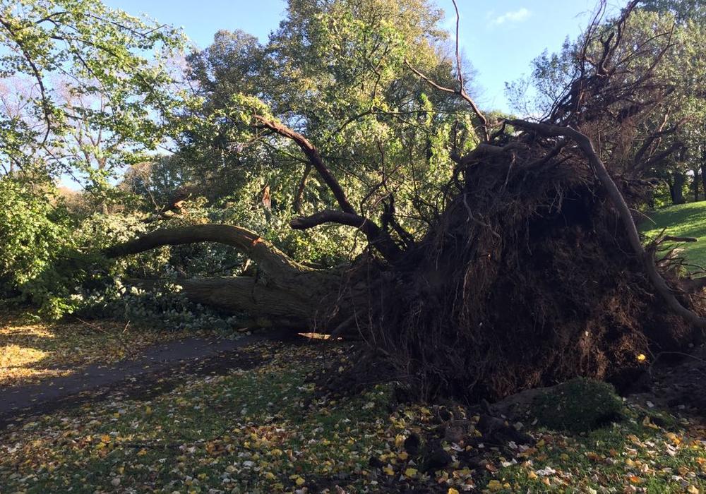 In Peine hatten Zahlreiche Bäume den starken Winden nichts entgegen zu setzen. Symbolfoto: Anke Donner