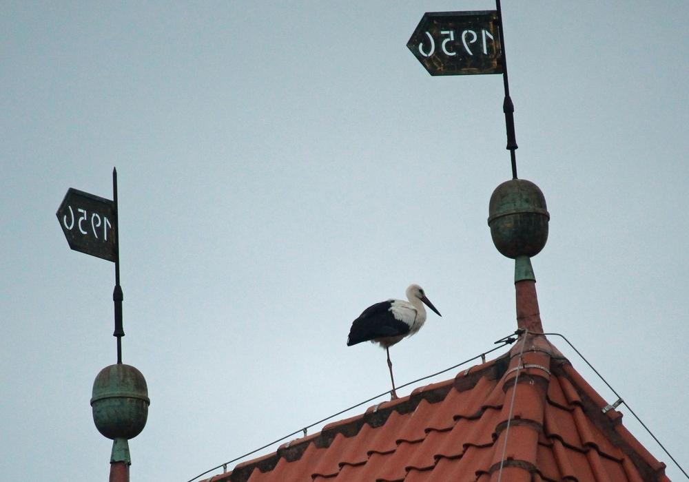 Storch hat sich auf dem Kirchdach von Atzum einquartiert. Foto: Lingelbach