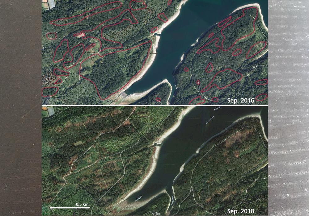 Luftbilder des Waldes an der Granetalsperre im Harz (Landkreis Goslar) im Vergleich zwischen September 2016 und 2018. In den rot markierten Bereichen sind Veränderungen des Waldes durch Sturm und Borkenkäfer deutlich. Die Zeitreihe wird nun durch Bilder aus dem September 2019 ergänzt. Fotos: NLF (oben)/Google (unten)