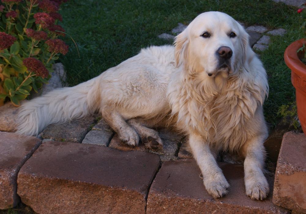 Hunde müssen ab morgen an die Leine. Foto: Anke Donner.