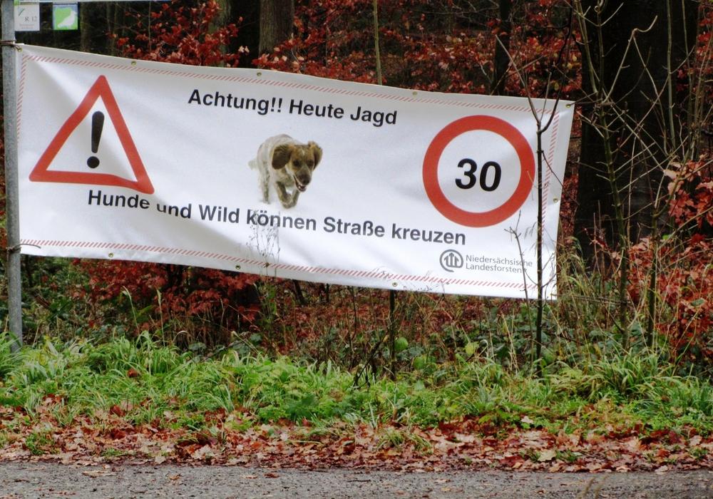 Die Landesforsten bitten Autofahrer mit besonderer Aufmerksamkeit zu fahren und auf Wild und Jagdhunde zu achten. Foto: Niedersächsische Landesforsten