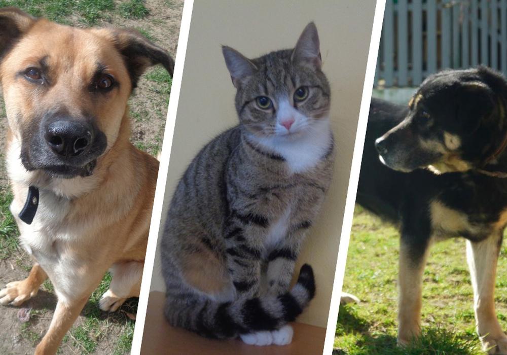 Sheldon, Kelly und Cadillac suchen ein Zuhause. Foto: Tierschutzverein Bad Harzburg