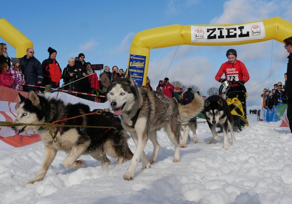 Geschafft aber glücklich stürmen die acht Siberien Huskys durch das Ziel. Foto: Alexander Panknin