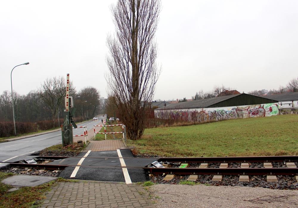Hier auf dem Gelände der ehemaligen Eierhöfe an der Neindorfer Straße könnte ein neuer Aldi-Markt entstehen. Foto: Nick Wenkel