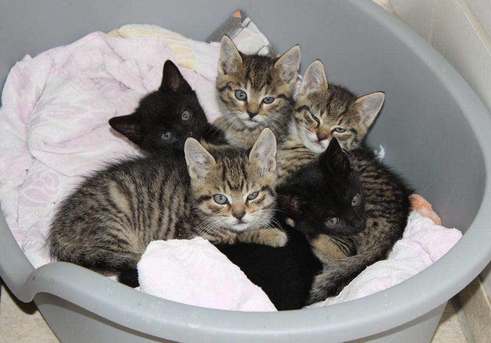Die Kommunen seien zum Tierschutz und zur Gefahrenabwehr verpflichtet und die Katzenpopulation stelle aktuell ein erhebliches Problem dar. Symbolbild: Anke Donner