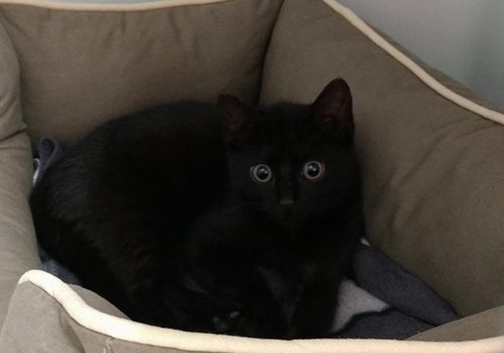 Die kleine Katze, die auf der Mülldeponie Bornum gefunden wurde, hat ein neues Zuhause. Foto: H. Johannessen