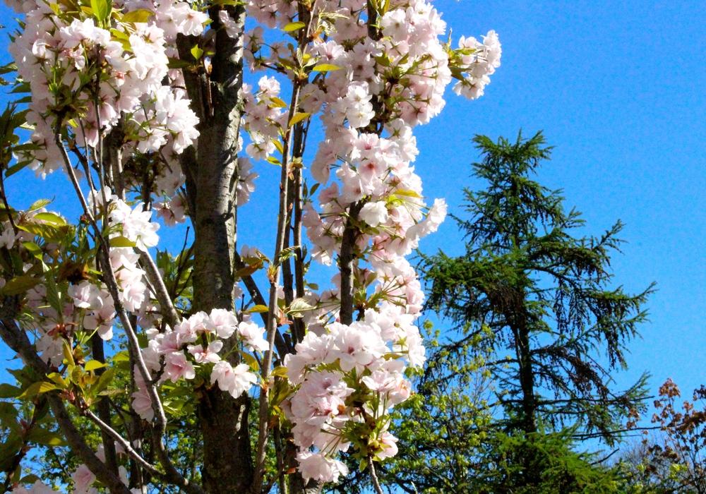 Wann wird es wieder richtig Frühling? Foto: Sina Rühland