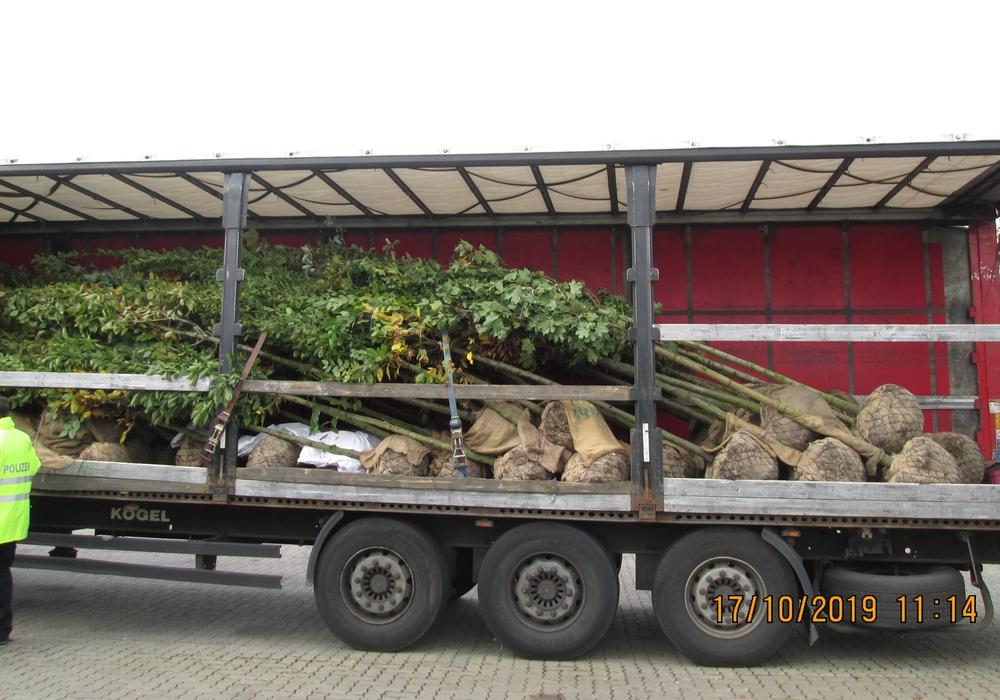 Ungesicherte Bäume auf einer Ladefläche. Fotos: Polizei