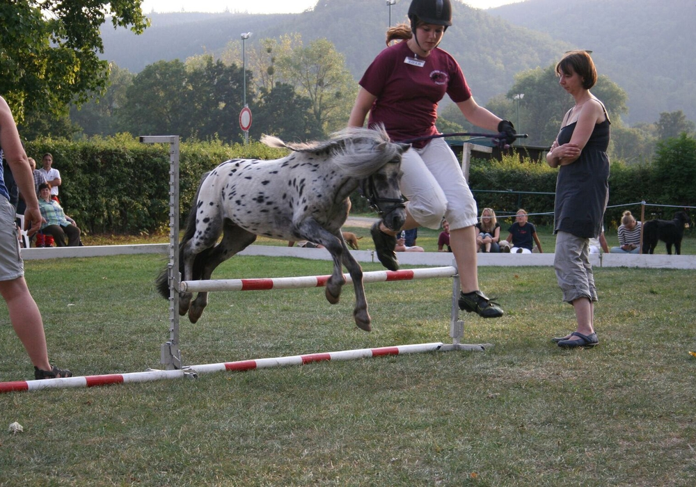 Das Showjumping ist ein Highlight beim Shetland-Pony-Festival im Sportpark.  Foto: Kur- Tourismus- und Wirtschaftsbetriebe der Stadt Bad Harzburg GmbH