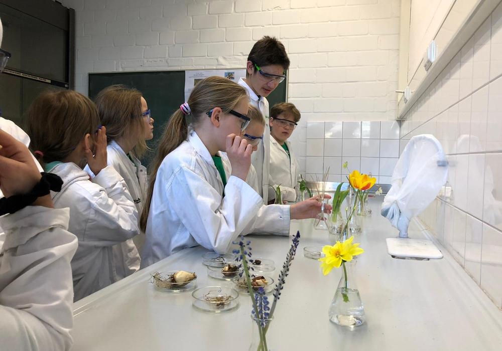 """KiWi-Kinder im Kurs """"Die Kraft der Frühblüher"""" im Agnes-Pockels-Labor(Technische Universität Braunschweig)."""" Foto: Haus der Wissenschaft Braunschweig/R. Glockenmeier"""