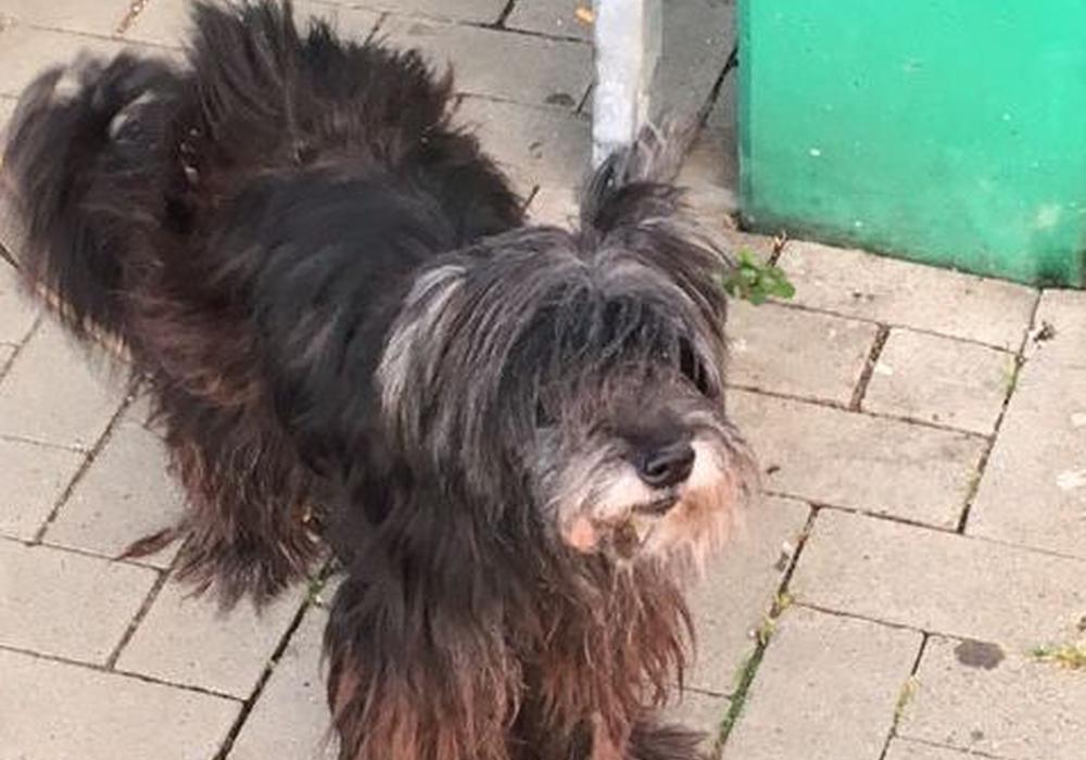 Die Polizei Goslar hat diesem Mischlingshund gefunden und such nun nach seinem Besitzer. Foto: Polizei
