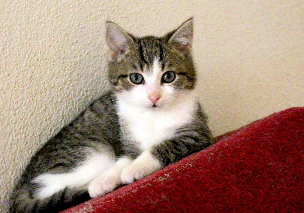 Auch Katzen sollen künftig registriert werden. Foto: Nick Wenkel