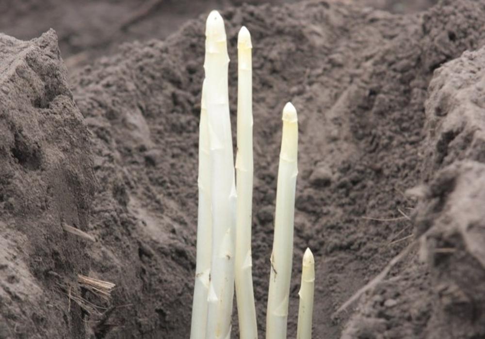 Die Anzahl der Gemüseanbaubetriebe ist zurückgegangen. Symbolfoto: Thorsten Raedlein