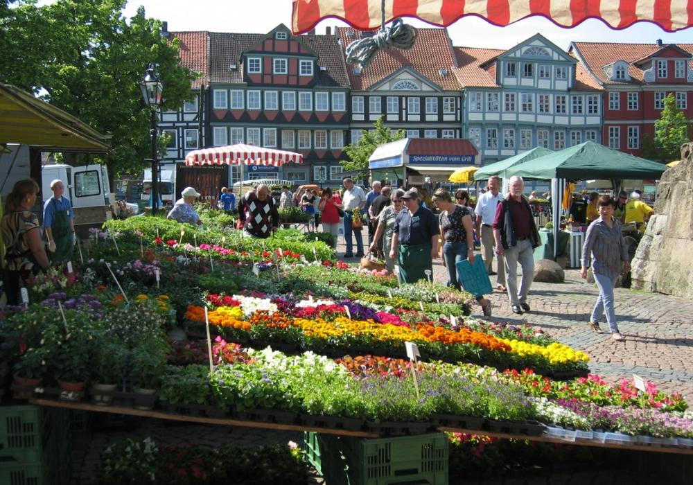 Der Wolfenbütteler Geranienmarkt - ein Veranstaltungshöhepunkt in der Gärtnerstadt. Foto: Veranstalter